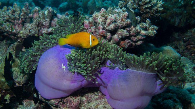Малдивски острови почивка